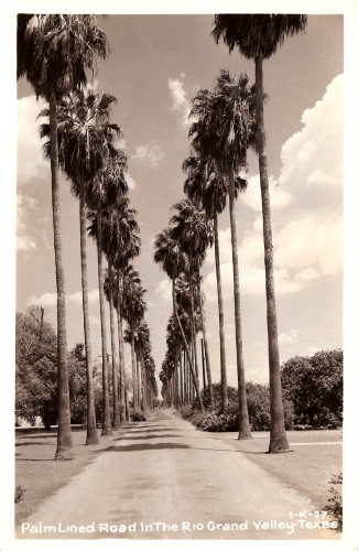 TX-1011-Palm Lined Road